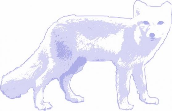 淡紫色北极狐北极动物手绘插画410548png图片素材