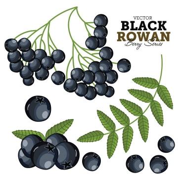 手绘风格黑花楸浆果美味水果图片免抠矢量素材
