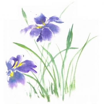 开了紫色花朵的菖蒲水彩插画219579png图片素材