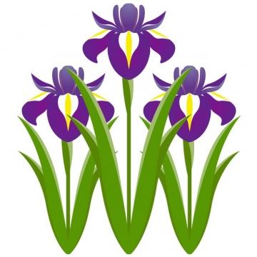 开了紫色小花的菖蒲插画163242png图片素材