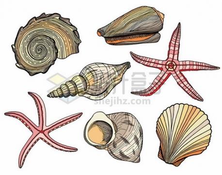 鹦鹉螺海星扇贝海螺等彩绘海洋动物779668png图片素材