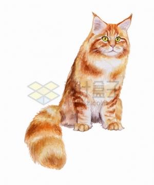 可爱猫咪缅因猫水彩插画png图片素材