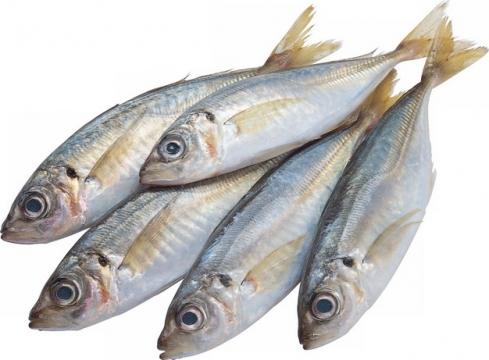 5条鱽鱼刀鱼914858png图片素材