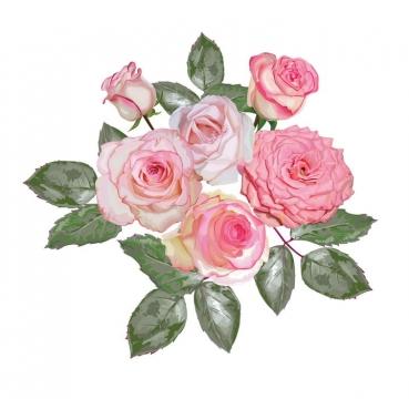 还在枝头带有叶子的牡丹花花朵花卉鲜花图片免抠矢量素材