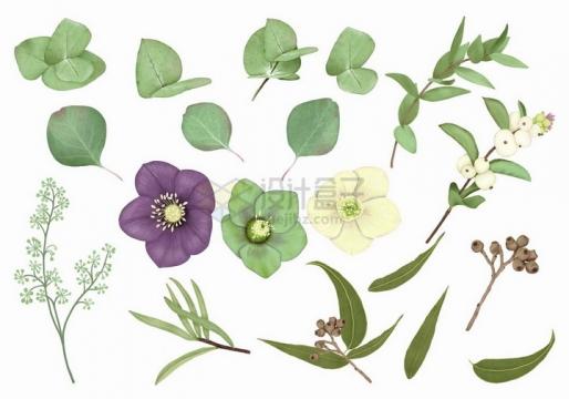 紫色绿色白色紫罗兰花朵和叶子png图片免抠矢量素材