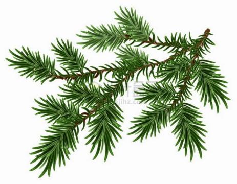 翠绿色的松枝松针松叶松树叶子png图片素材
