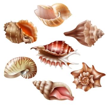 7款各种不同的海螺鹦鹉螺贝壳图片海洋生物免抠素材