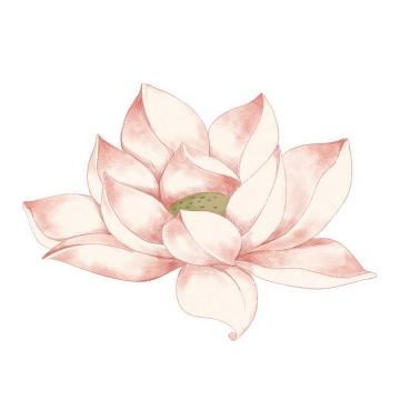 手绘风格粉色盛开的莲花荷花图片免抠素材