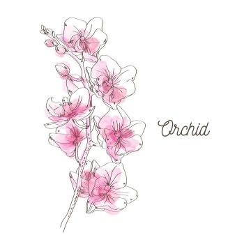 黑色线条粉色上色风格枝头上的唯美桃花图片免抠矢量素材