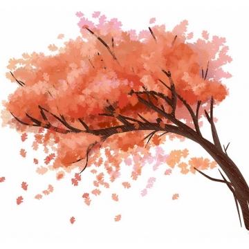 秋天树叶变红的大树凤凰树水彩插画970482png图片免抠素材