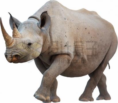 非洲白犀牛png图片素材