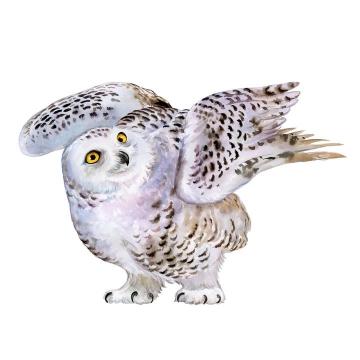 逼真的彩色猫头鹰雪鸮鸟类野生动物图片免抠矢量素材