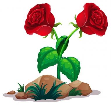 石头和两朵红色玫瑰花图片免抠矢量素材