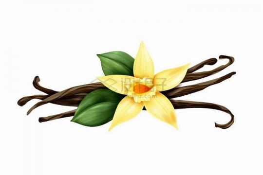 新鲜的黄色花朵香草花和叶子豆角干png图片免抠矢量素材