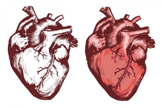 手绘风格心脏人体组织器官图片免抠素材