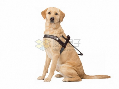 坐地上的导盲犬png图片素材