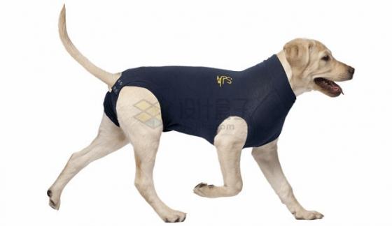 穿制服的导盲犬png图片素材