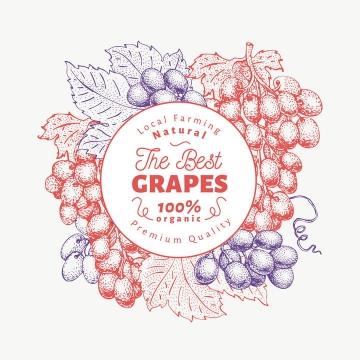 复古素描风格葡萄水果标题框图片免抠素材