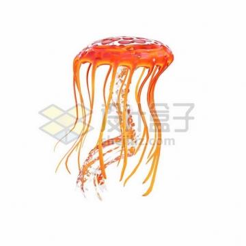 橙红色的水母469703png图片素材