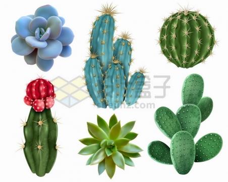 逼真的多肉植物仙人掌仙人球仙人棒等盆栽植物png图片免抠矢量素材