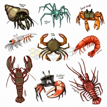 寄居蟹蜘蛛蟹螃蟹大虾小龙虾大龙虾等甲壳动物插画png图片素材