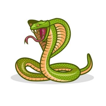 一款青色的眼镜蛇图片动物免抠素材