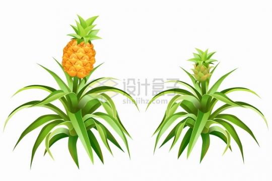 长在枝头上的菠萝凤梨美味水果png图片素材