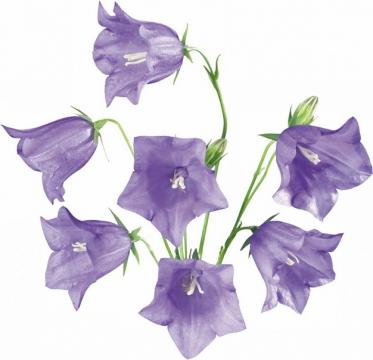 曼陀罗花紫色花朵447917png图片素材\r\n