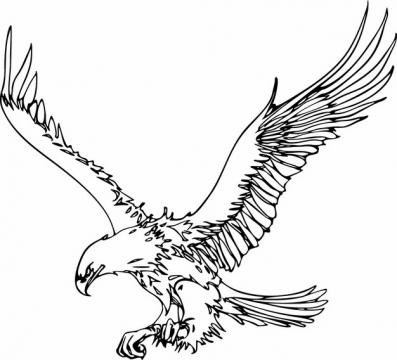 展翅雄飞的老鹰大鹏鸟线条插画114595png图片素材