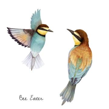 手绘水彩画风格两只蜂鸟小鸟免抠矢量图片素材