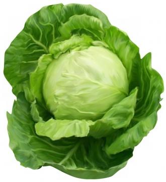 甘蓝菜美味蔬菜891255png图片素材