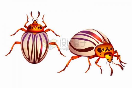两只马铃薯甲虫甲壳虫小昆虫png图片免抠矢量素材