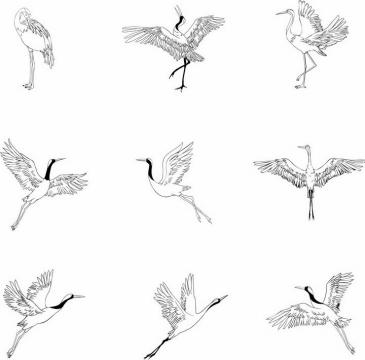 9款黑色素描手绘仙鹤丹顶鹤png图片免抠矢量素材