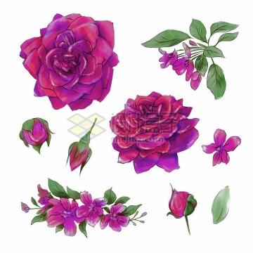 各种鲜艳的红色玫瑰花桃花等花朵花苞水彩插画png图片素材