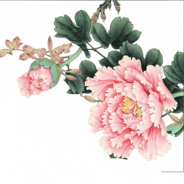 粉色芍药花国画插画767937png图片素材