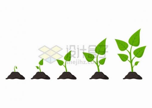 小树苗从发芽到生长过程图png图片免抠矢量素材