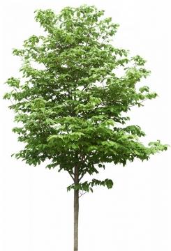 郁郁葱葱的大树540599png图片素材
