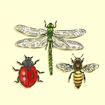 彩色手绘风格蜻蜓七星瓢虫和小蜜蜂昆虫免抠矢量图片素材