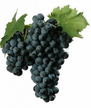 一串紫黑色的夏黑葡萄png图片素材
