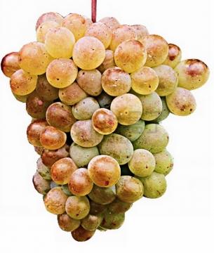 一串哈密葡萄png图片素材