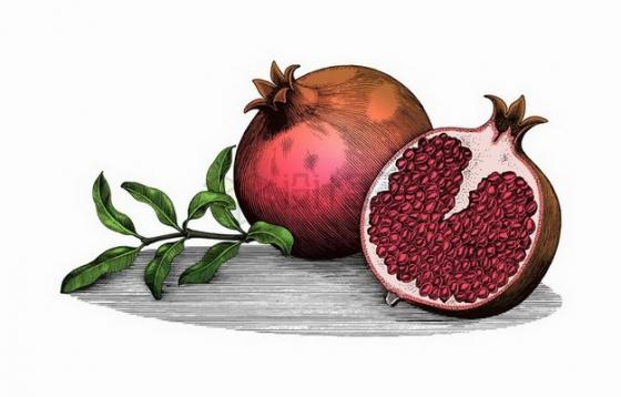 剥开的石榴美味水果彩绘素描插画png图片免抠矢量素材
