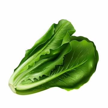 绿油油的生菜美味蔬菜png图片免抠矢量素材