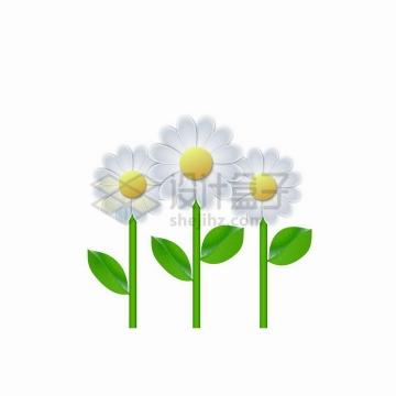 三朵带绿色叶子的雏菊花朵鲜花png图片免抠矢量素材