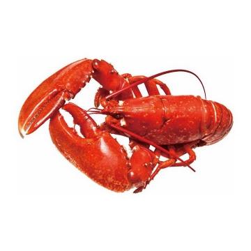 一只美味河鲜麻辣小龙虾美食图片免抠素材