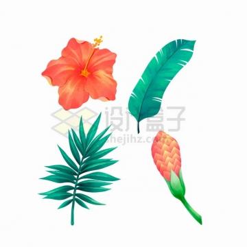 红色曼陀罗芭蕉叶等热带花卉树叶彩绘插画png图片素材