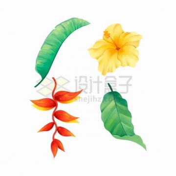 黄色曼陀罗芭蕉叶等热带花卉树叶彩绘插画png图片素材