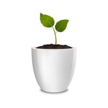 白色花盆中发芽的盆栽小树苗png图片免抠矢量素材