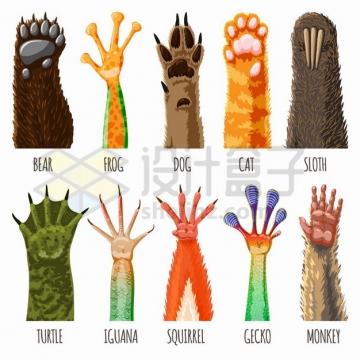 熊掌狗爪猫爪猴子等动物的爪子和脚掌插画png图片素材