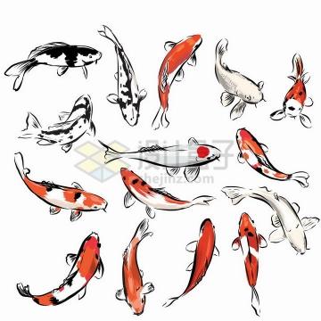 各种彩绘风格黑白色红色鲤鱼锦鲤png图片免抠矢量素材