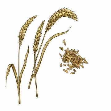 彩绘风格小麦麦穗和小麦粒png图片免抠矢量素材